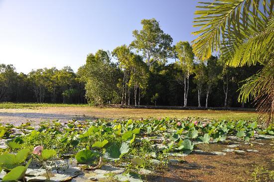 Centenary Lakes - Cairns Botanic Gardens: Water lilies