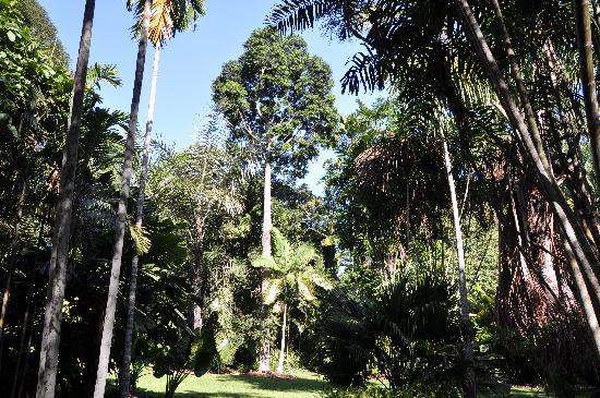 Centenary Lakes Botanic Gardens: Flecker gardens