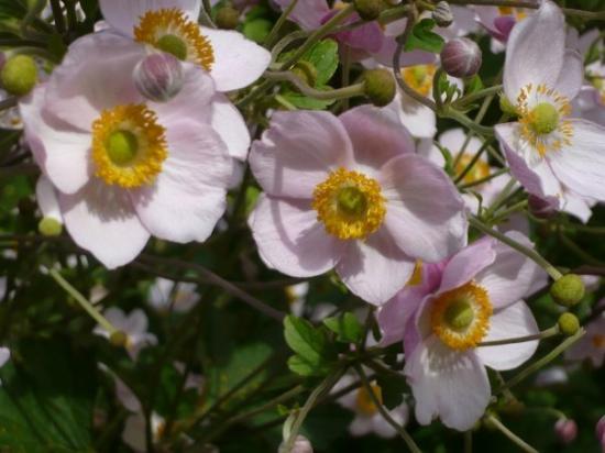 More Pretty Flowers Bild Von Lauterbrunnen Lauterbrunnen