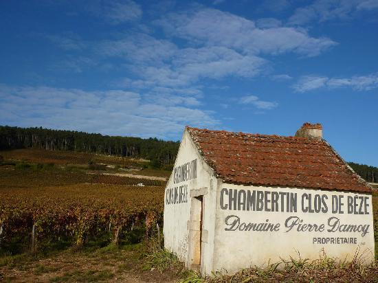 Authentica Wine Tours Burgundy