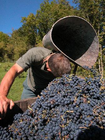 Authentica Tours: Harvest - www.authentica-tour.com
