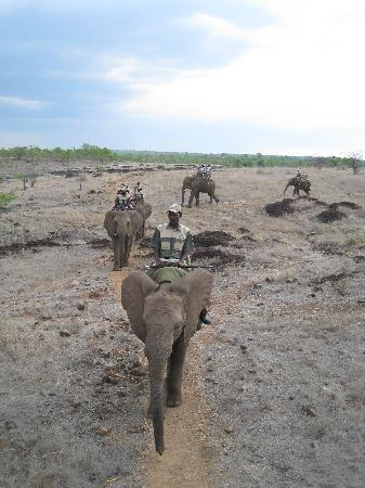 The Kingdom at Victoria Falls: Elephant Ride - organised by hotel booking office