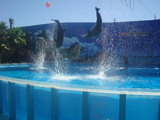 Rocha Brava Village Resort: Zoomarine - Dolphin Show