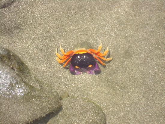 Villa Del Sol: Mr Crab