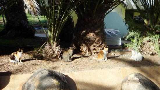 Hotel Fuerteventura Playa : Das Katzen Cafe