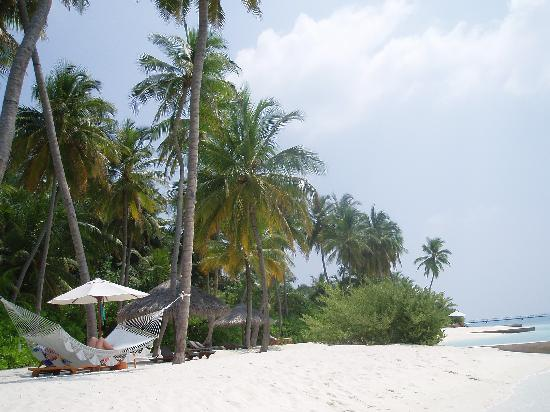 Conrad Maldives Rangali Island: Beech