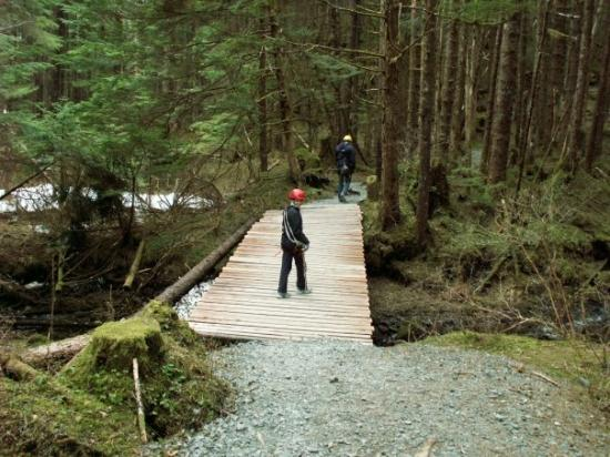 Alaska Zipline Adventures: All geard up and walking up to get to the top of the trees