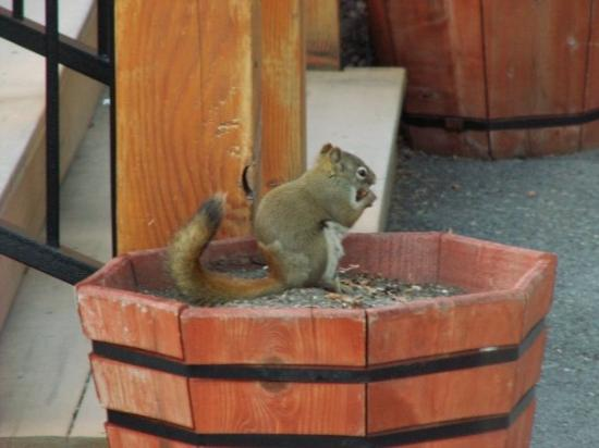Denali Princess Wilderness Lodge: A cute squirrel nibbling away at a nut