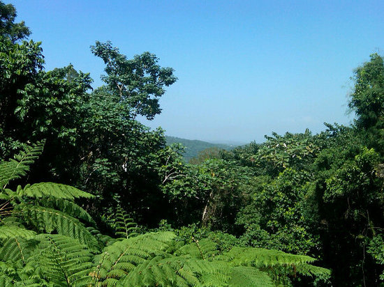 Carolina, Porto Rico: The Rain Forest El Yunque