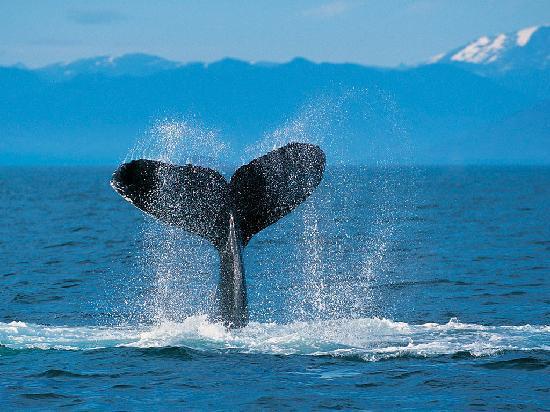 Executive Royal Inn Clewiston : whale