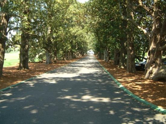 Augusta, GA: Magnolia Lane at Agusta National Country Club