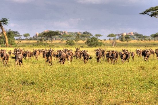 blog traveling senegal south africa tanzania