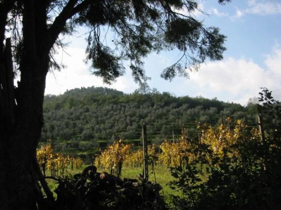 Area surrounding Castiglion Fiorentino