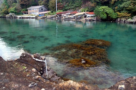 矢島 経島