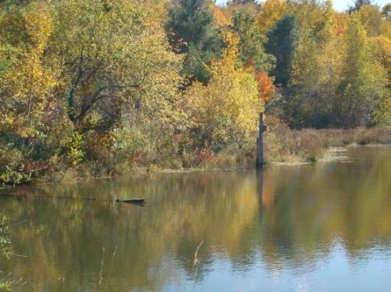 Pine Tree State Arboretum: Viles Pond @ the Arboretum