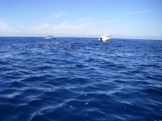 Tamassa: Dauphins à Tamarin