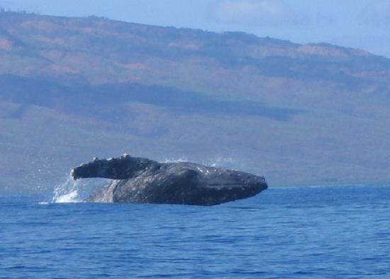 Hawaii Ocean Rafting : So cool