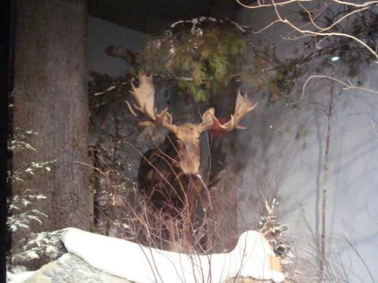 Maine State Museum (Augusta): Top Tips Before You Go ...