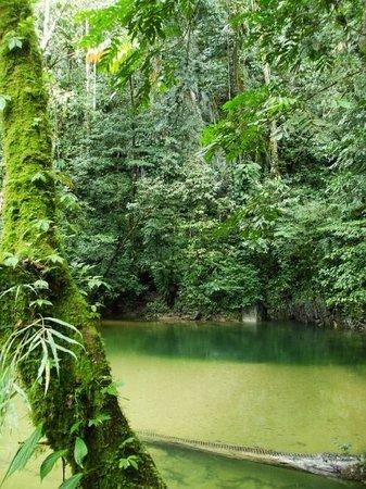 Imagen de Mulu World Heritage Area