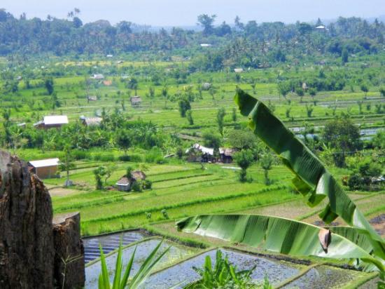 Bilde fra Banyan Tree Bike Tours