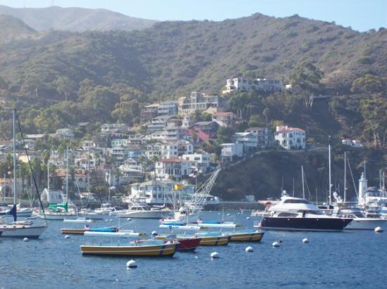 Catalina bay picture of catalina island california for Catalina bay