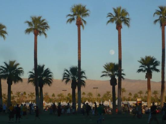 Indio, Californien: It was so beautiful! I love palm trees.