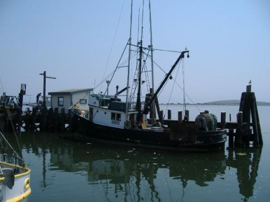 Bodega Bay Sailing: Fishing boat at Bodega Bay wharf.