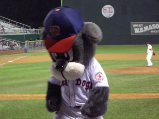 Hadlock Field: Slugger the Sea Dog's mascot, dejected after the game gets out of reach. The Sea Dogs lost 6-0.