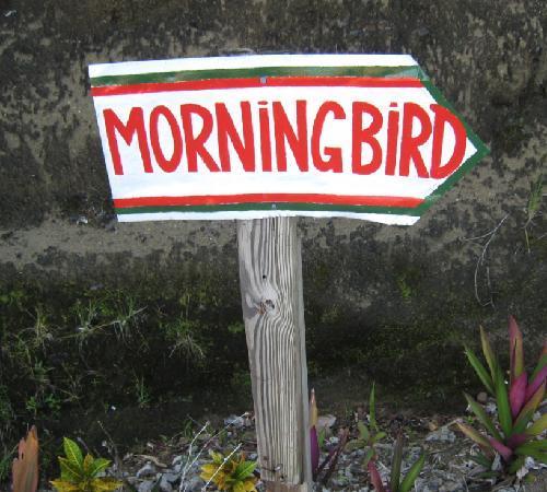 Island Bay Boutique Hotel: morning bird