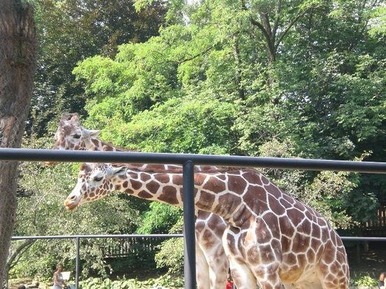 Animal World Review Of Erie Zoo Erie Pa Tripadvisor