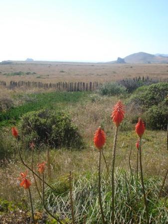 Bilde fra Bodega Bay