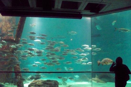 My Angels Picture Of Audubon Aquarium Of The Americas