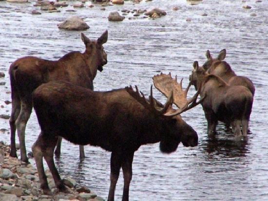 Cape Smokey Provincial Park : www.IngonishHarbour.com