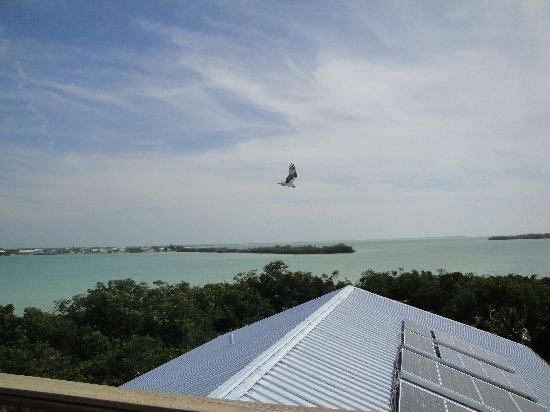 Summerland Key, FL: View from the crow's nest
