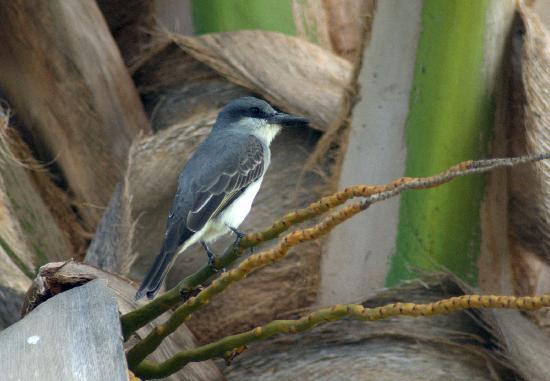 Sugar Cane Club Hotel & Spa: King Bird