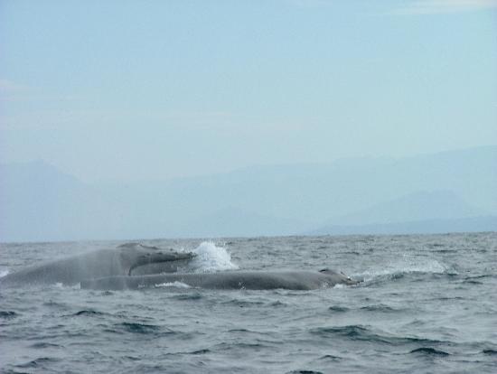 Decameron Los Cocos: Whales