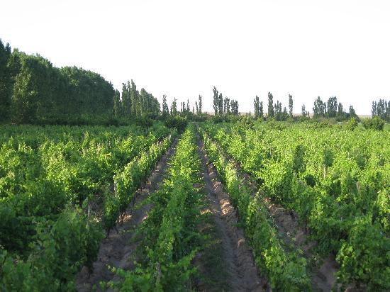 La Carmelita Hotel Rural: Nearby vineyards