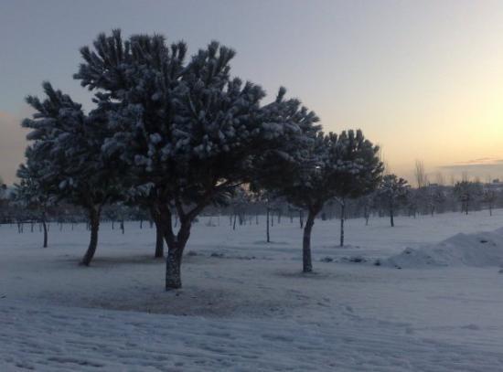 Leganes, Spanien: Esperando el calor del sol. (O'hara)