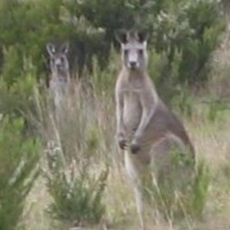 Bilde fra Ballarat