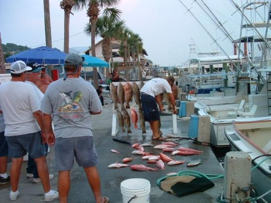 The party fishing boats display their catch off thomas for Panama city beach party boat fishing