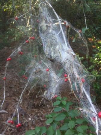 Houston, TX: Post-haloween-syndrome wildberry