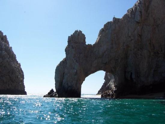 Cabo Sailing Ocean Adventures: El Arco - dinosaur drinking water :)
