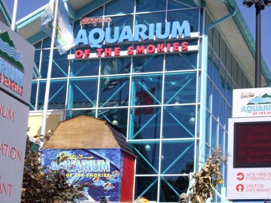 Ripley's Believe it or Not Aquarium~ - Picture of ...