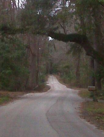 Jacksonville Zoo & Gardens : An amazingly beautiful road with breath taking trees, about a mile from the house.