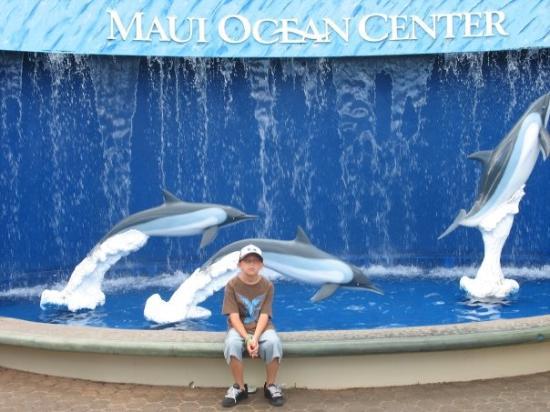 Maui Ocean Center Resmi