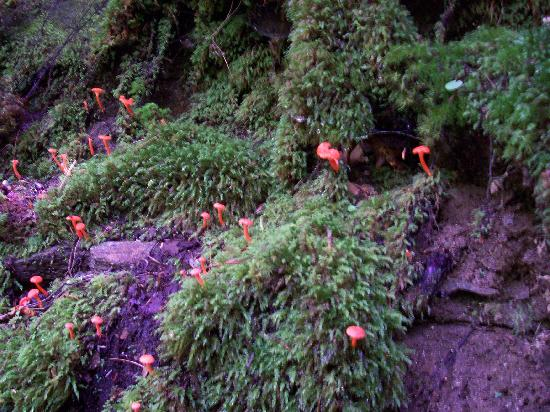 Deep Creek Tube Center: day-glow mushrooms growning on the side of the mountain