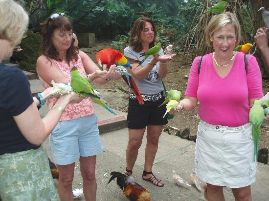Saint Ann Parish, Jamaica: many lovely birds to look at and feed