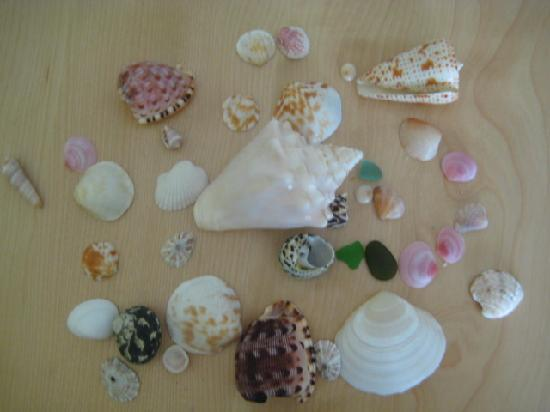 Cottages By The Sea: Seashells and sea glass