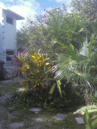 Villas Ixchel: garden