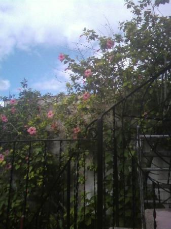 Villas Ixchel: garden 2